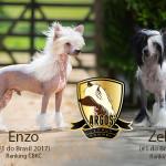 cartaz-enzo-e-zelda